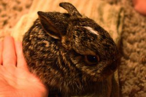 Wild Bunny: Lessons in Life & Death - IMG 6315 300x200 - Wild Bunny: Lessons in Life & Death