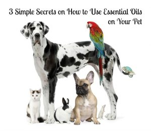 3 Simple Secrets on How to Use Essential Oils on Your Pet - 13838509 10154117206723880 69994355 o 300x260 - 3 Simple Secrets on How to Use Essential Oils on Your Pet