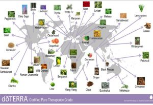 doTERRA Breaks the Pattern For Sourcing Essential Oils - doterra sourcing 300x205 - doTERRA Breaks the Pattern For Sourcing Essential Oils