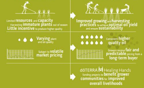 doTERRA Breaks the Pattern For Sourcing Essential Oils - Co Impact Sourcing Bottom half - doTERRA Breaks the Pattern For Sourcing Essential Oils